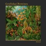 Blindsmyth – Gryllidae Remixes