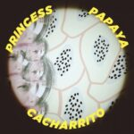 Princess Papaya – CACHARRITO
