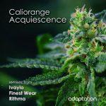 Caliorange – Acquiescence